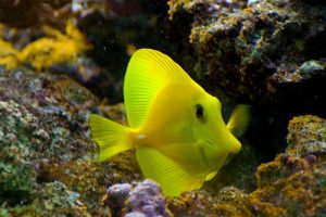 40. Long Nose fish