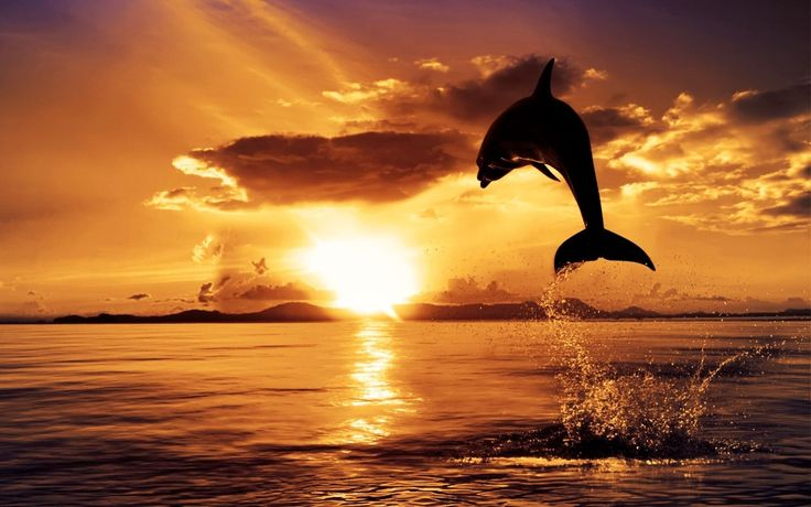 60. Dolphin in Sunset