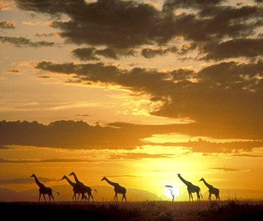 61. Sunset in Africa