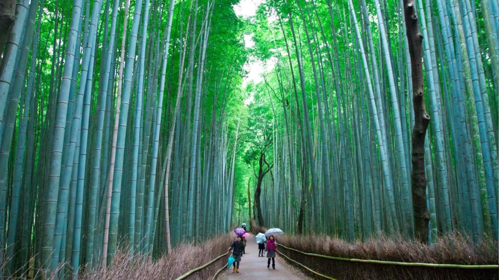 93. Arashiyama Bamboo Forest Kyoto Japan